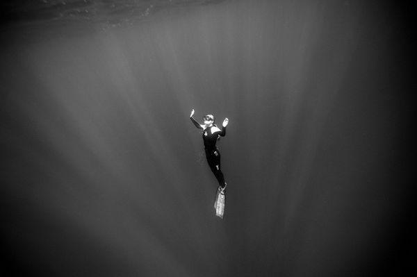和鲨鱼一起自由潜水